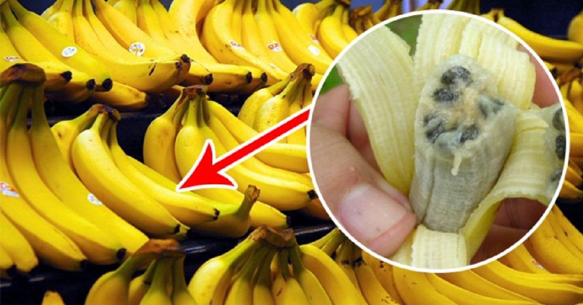 bananen ziekte